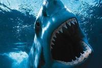 angry-shark